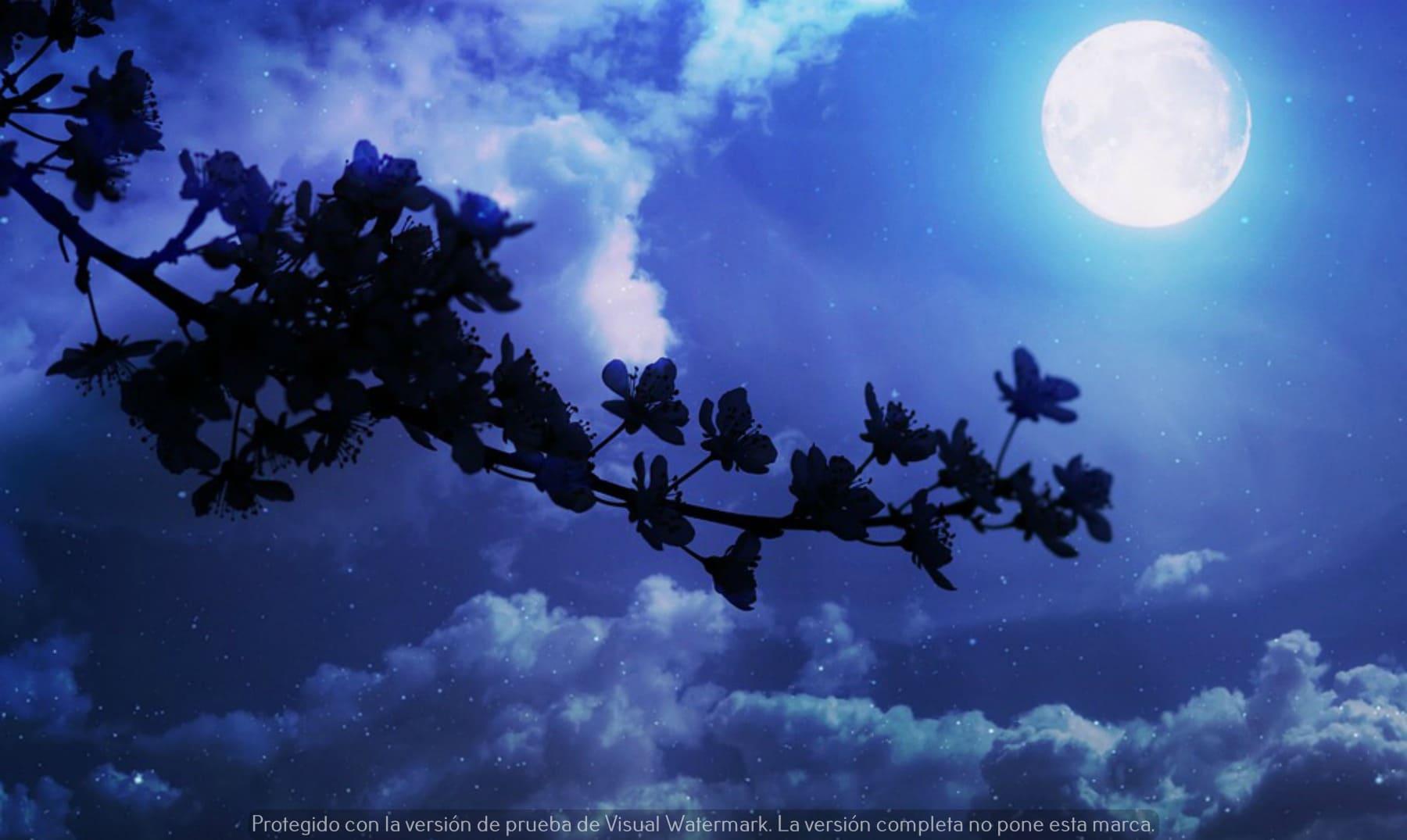 linda noche que descansen